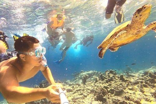 馬爾地夫阿丹護士鯊12